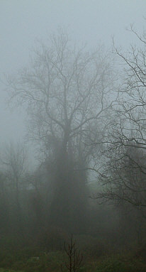 misty foggy winter scene